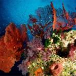 Fiji reef scene (Bonnie Wong)