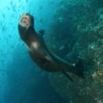 Galapagos Sea Lion (Bonnie Jackson)