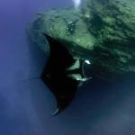 Manta dwarfs a diver (Ben Jackson)