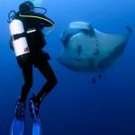 Manta and diver (Ben Jackson)