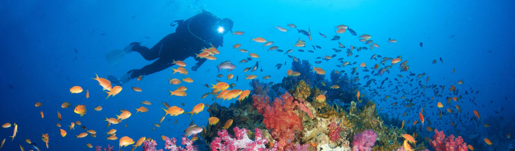 Fiji Liveaboards Scuba Diving Holidays Equator Diving